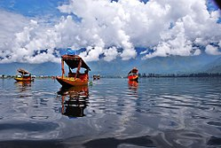 Shikara boats on Dal Lake