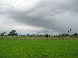 Damaramadugu Rice Fields
