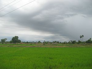 Nellore district - Damaramadugu rice fields in Nellore District