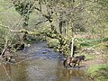 Dane's Brook with Exmoor Ponies - geograph.org.uk - 875625.jpg