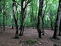 Dark Forest (3846241997).jpg