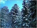 December Black Mountains Foret Noir - Master Mythos Black Forest Photography 2013 High Glotter Valley Sägendobel Pass - series Germany Diamond pictures - panoramio (3).jpg