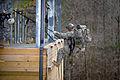 Defense.gov photo essay 110220-A-7341H-037.jpg