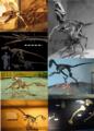 Deinonychosauria diversity.png