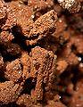 Descloizite-Vanadinite-261817.jpg