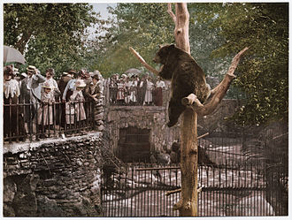 Lincoln Park Zoo - Photochrom of the bear pit of the Lincoln Park Zoo, c. 1897-1901
