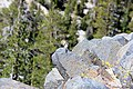 Devils Postpile National Monument-8.jpg