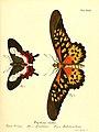 Die ausländischen Schmetterlinge in Abbildungen nach der Natur (Tab. XXII) (6012538588).jpg