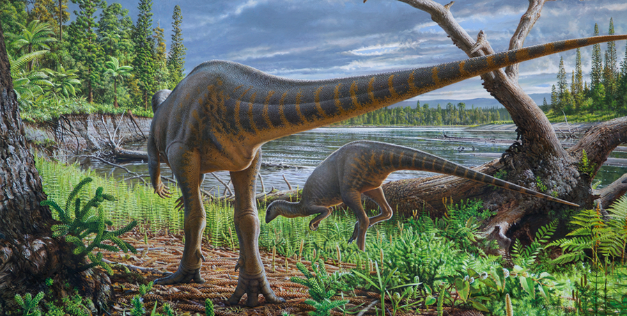 Diluvicursor life restoration cropped.png