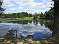Dmytrivka (Fastiv) pond1.JPG