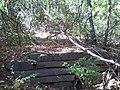Drainage - panoramio (1).jpg