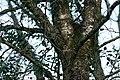 Drey in a Tree (32517405005).jpg