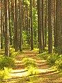 Druvciems - panoramio (37).jpg