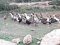 Ducks 20190401 172704.jpg