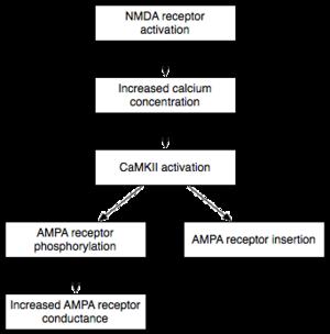 Encoding (memory) - Early LPT Mechanism