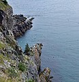 East Coast Trail (43319652374).jpg