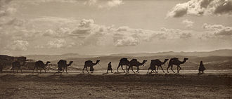 "Mount of Olives - Egyptian camel transport passing over ""Olivet"", 1918"