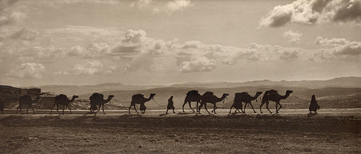 Egyptian camel transport3