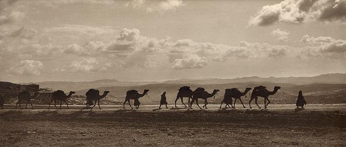 Egyptian camel transport3.jpg