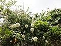 El Jardín De Eva (64151891).jpeg