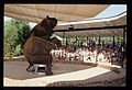 Elephant Show, Grant's Farm (MSA) (5789077508).jpg