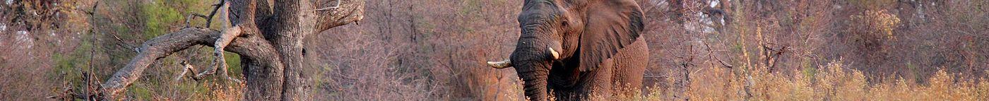 Elephant okavango (8089387441) banner LQ.jpg