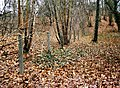Entenschnabel - Grundstück9-Süd.jpg