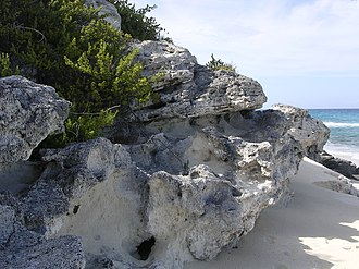 Facies - Eolianite carbonate facies (Holocene) on Long Island, Bahamas