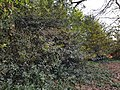 Epping Forest 20180125 150043 (49374071088).jpg