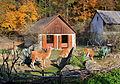 Escondido exposition, Zoo Jihlava, llamas 3.jpg
