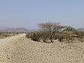 Ethiopie-Avant Berhale.jpg