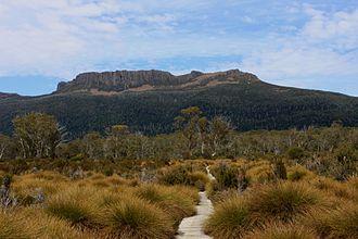 Gymnoschoenus sphaerocephalus - Button grassland (foreground) along the Overland Track, Tasmania