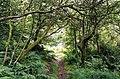 Exmoor, Ashcombe Plantation, Simonsbath - geograph.org.uk - 72128.jpg