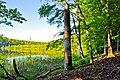 FFH DE 2949-302 Grumsiner Forst Redernswalde-07.06.2014-3.JPG