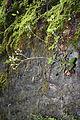 FR64 Gorges de Kakouetta23.JPG
