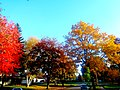 Fall Colors In Madison - panoramio (1).jpg