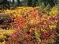 Fall colors (13944261449d4f09a6da8fdfc1738288).JPG