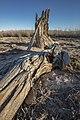 Fallen Tree at St. Thomas (30afe9e2-bdd9-4be9-9d22-7ed226fda570).jpg