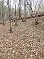 Fallen leaves arratzain.JPG