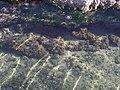 Feneraltı sahili - panoramio.jpg