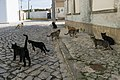 Feral cats in Praia do Pedrógão, Portugal, November, 2018-2.jpg