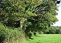 Field Boundary near Tre-fâch, Llanfair Nant-gwyn - geograph.org.uk - 921776.jpg