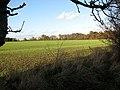 Field east of Brooke Wood - geograph.org.uk - 1582877.jpg