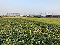 Fields near east entrance of Yoshinogari Historical Park.jpg