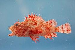 Fish4440 - Flickr - NOAA Photo Library.jpg