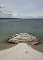 Fishing Cone Geyser.jpg