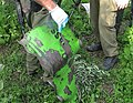 Flickr - Israel Defense Forces - Shell of a Rocket Fired at IDF Forces.jpg