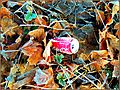 Flickr - ronsaunders47 - AUTUMN COLOURS,TEXTURES AND TRASH...jpg