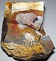 Flint (Vanport Flint, Middle Pennsylvanian; Nethers Flint Quarries, Flint Ridge, Ohio, USA) 216.jpg