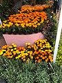 Flor de cempasúchil.jpg